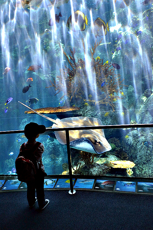 Jax gazes in awe at the Long Beach Aquarium